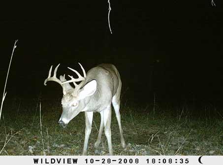 камеры ночного наблюдения олень